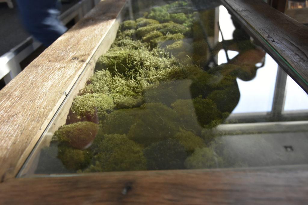 Nærbilde av bord med mose som midtpunkt under glassplate